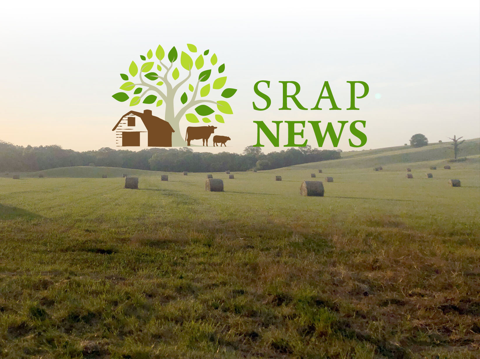 2016_srap_newsletter_headerjpg